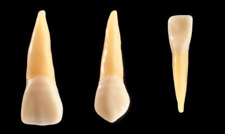 Orofacial #16 - Quantos Dentes Temos ? Todos os Dentes são Iguais?