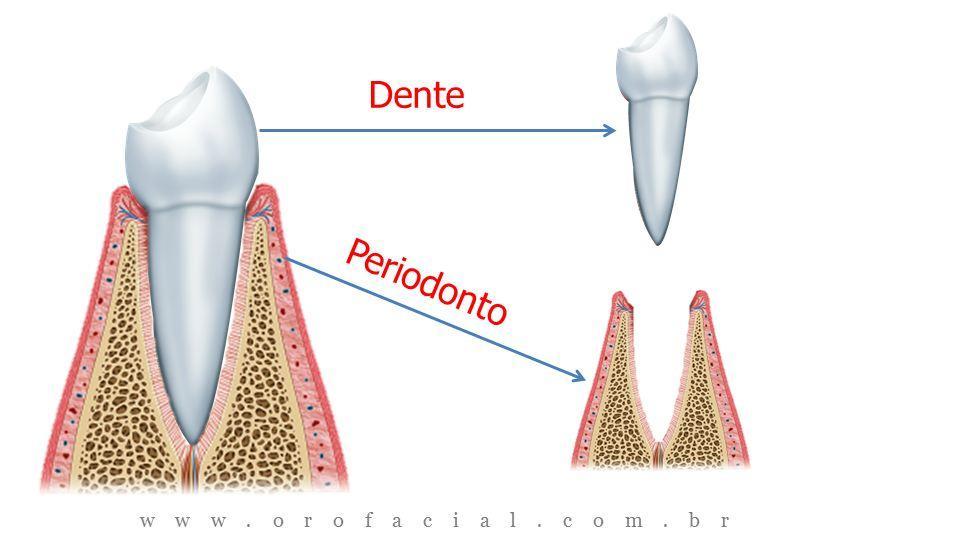 Dente X Periodonto