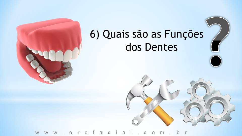 Quais as funções dos dentes