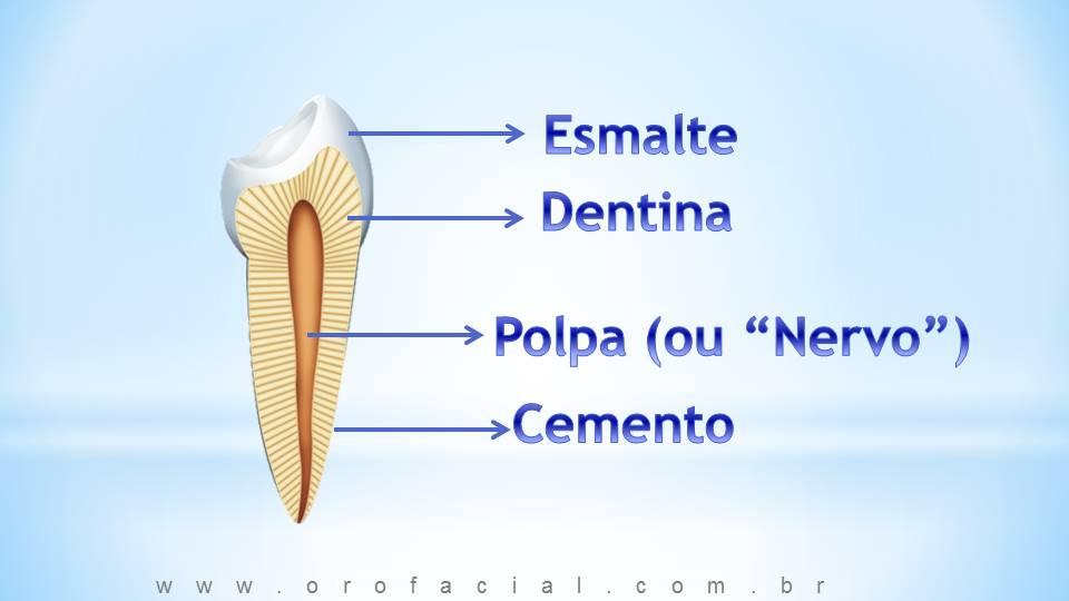 Dente, esmalte dental, cemento, raiz