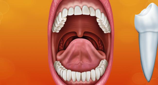 Dentes: Você precisa saber mais sobre eles…