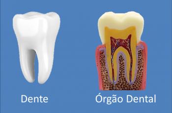 Orofacial #83 – Dentes e Órgãos Dentais: Uma diferença crucial para a sua saúde bucal